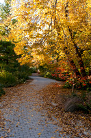 Autumn at Botanical Garden in Madison