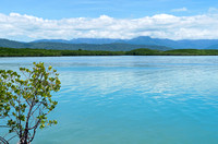 Coral Sea and Forest at Port Douglas