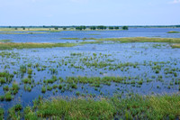 Necedah Wildlife Refuge Wetlands