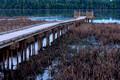 Boardwalk in Bog at Bloomington Refuge