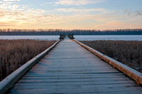 Boardwalk and Platform in Wildlife Refuge